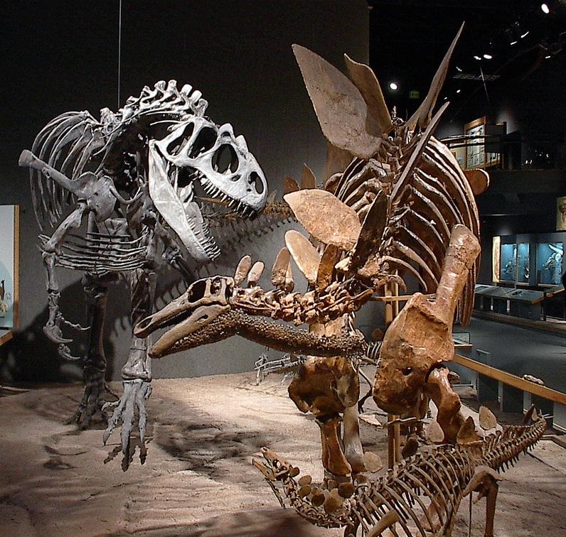 nuova specia dinlosauro