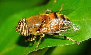 malattie da insetto