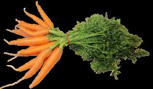 carote ed abbronzatura
