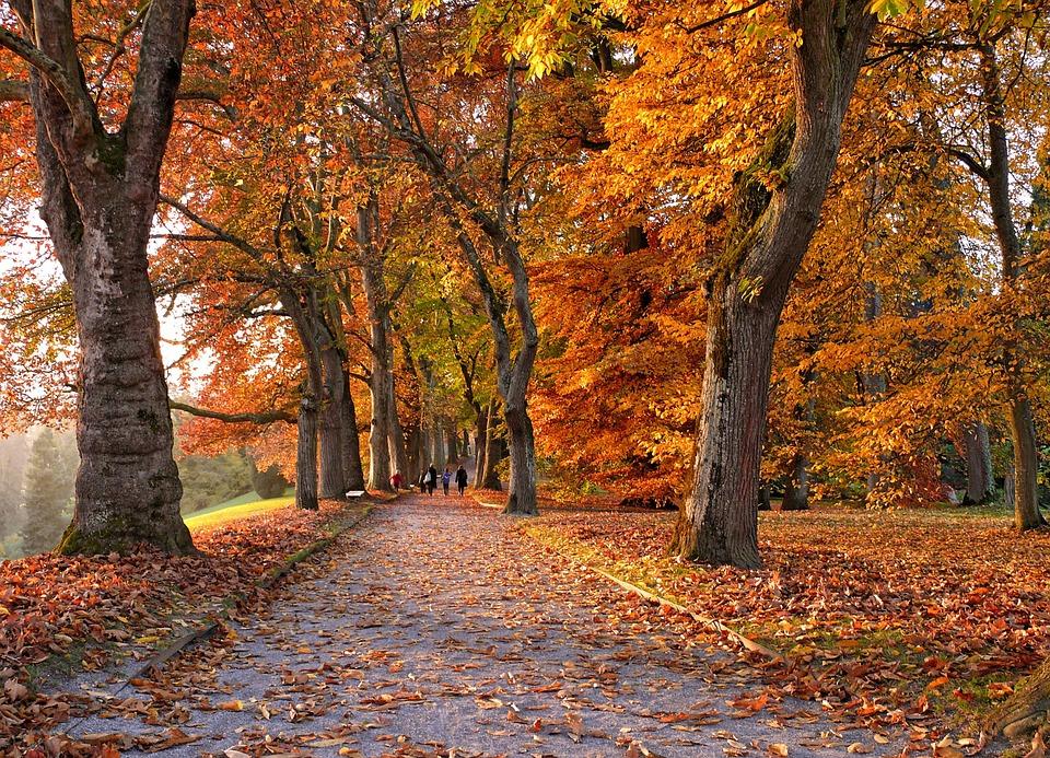 autunno nel mondo