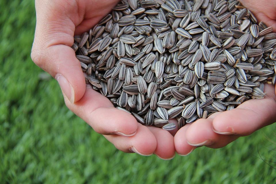 semi da mangiare