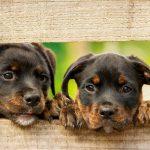 cani e ristorante